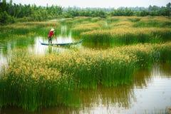 Ландшафт перепада Меконга с въетнамской весельной лодкой на Nang - типом женщины поля дерева спешкы, южного Вьетнама Стоковое фото RF