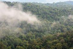 Ландшафт плотного тропического тропического леса на национальном парке Khao Yai стоковое изображение rf