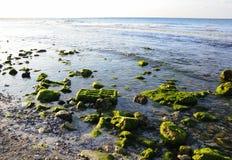 ландшафт пляжа утесистый Стоковое Изображение