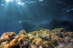 ландшафт подводный стоковые фотографии rf