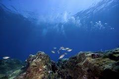 ландшафт подводный стоковая фотография