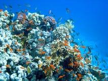 ландшафт подводный Стоковое Фото