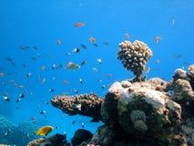 ландшафт подводный Стоковые Изображения RF