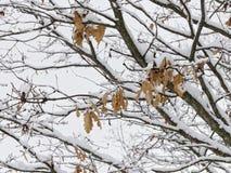 Ландшафт покрыл весь белый снег Стоковое Изображение