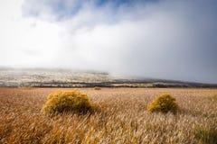 Ландшафт полей горы в Новой Зеландии Стоковая Фотография RF