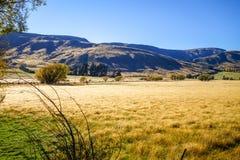 Ландшафт полей горы в Новой Зеландии стоковое изображение