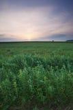 ландшафт Польша Стоковое Изображение