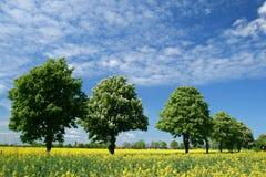 ландшафт Польша Стоковые Фото