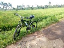 ландшафт поля велосипеда и риса стоковая фотография rf