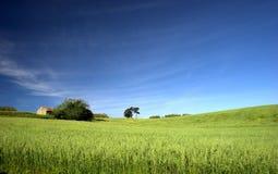 ландшафт поля зеленый Стоковое Изображение