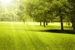 ландшафт поля зеленый Стоковые Изображения RF