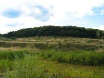 Ландшафт поля которое постепенно проходит в лес на холме стоковое фото rf