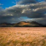 Ландшафт поля пшеницы перед горами Стоковая Фотография