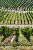 Ландшафт предпосылки виноградников стоковые изображения