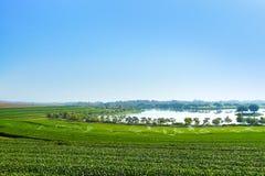 Ландшафт предпосылки голубого неба плантации чая Стоковое Изображение