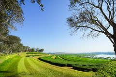 Ландшафт предпосылки голубого неба плантации чая Стоковые Изображения