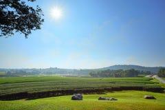 Ландшафт предпосылки голубого неба плантации чая Стоковые Фото