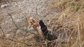 Ландшафт природы осени, идя вне на берег озера леса, steadicam сток-видео