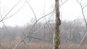 Ландшафт природы осени, идя вне на берег озера леса, steadicam акции видеоматериалы