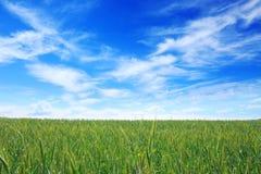 ландшафт просто Стоковая Фотография RF