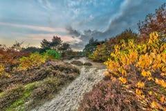 Ландшафт пустоши осени с желтыми листьями Стоковое фото RF