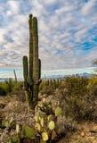 ландшафт пустыни Аризоны Стоковые Изображения RF