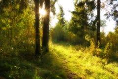 ландшафт пущи дня солнечный смешанная древесина 2 съела солнце через footp деревьев стоковое фото rf
