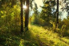 ландшафт пущи дня солнечный смешанная древесина 2 съела солнце через footp деревьев стоковая фотография rf