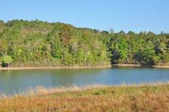 Ландшафт пущи и озера стоковые изображения