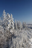 ландшафт пущи над зимой Стоковые Фото