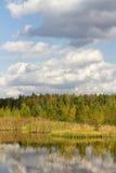 Ландшафт пущи осени стоковая фотография rf