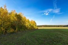 Ландшафт пущи осени Стоковые Изображения