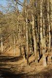 Ландшафт пущи осени Стоковые Изображения RF
