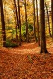 ландшафт пущи падения Стоковое Фото