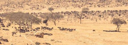 Ландшафт равнин саванны в Кении стоковые изображения rf