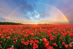 Ландшафт радуги над полем мака стоковое изображение rf