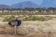 Ландшафт раннего утра, национальный заповедник Samburu, Great Rift Valley, Кения стоковые изображения rf