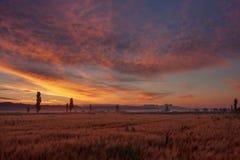 ландшафт рассвета provencal Стоковое Изображение