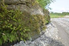 Ландшафт речного берега вдоль реки Bulatukan, Tamlangon, Matanao, Davao del Sur, Филиппин стоковое изображение rf