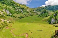 ландшафт Румыния сельская Стоковое Изображение RF