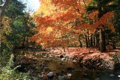 ландшафт ручейка Стоковое Изображение