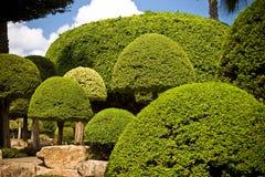 ландшафт сада Стоковые Фотографии RF