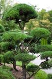 Ландшафт сада. Topiary Стоковое фото RF