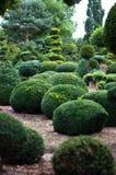 Ландшафт сада. Topiary Стоковая Фотография