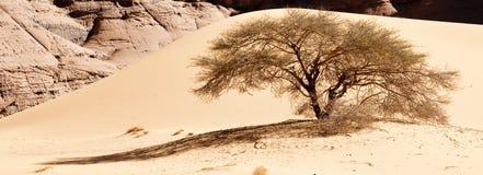 ландшафт Сахара пустыни Алжира Стоковые Фотографии RF
