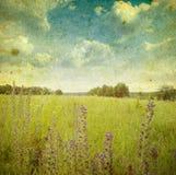 Ландшафт сбора винограда стоковое фото rf