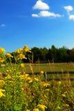 ландшафт сельский Стоковые Изображения RF