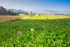 Ландшафт сельской местности в Словении, кровоточенном районе стоковая фотография rf