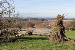ландшафт сельской местности осени с deadfallen деревья и голубое небо Стоковые Фотографии RF