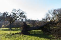 ландшафт сельской местности осени с deadfallen деревья и голубое небо Стоковые Изображения RF